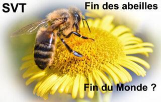 illustration article abeilles.jpg