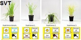 Experience plantes 6e