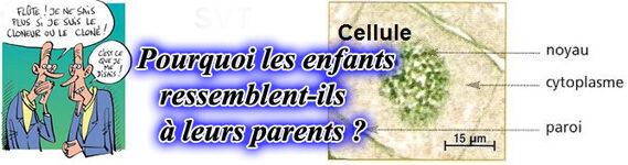 Caractères héréditaires - 4e